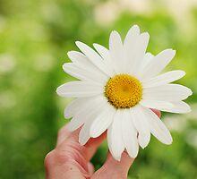 Daisy by photographyjen
