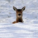 Oh, Deer! by Paul Cook
