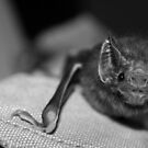 Vampire Bat by Kdeeg