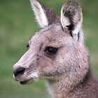 Western Grey Kangaroo by James Millward