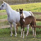 Arab Mare and Foal by livinginoz