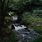 emerald way - Otway national Park by Jason Kiely