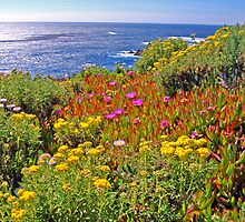 Hwy 1 Vista by Terry Watts