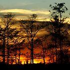 Blazing Sunset by nancyb926