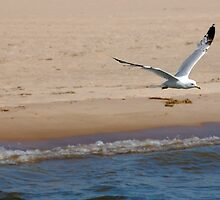 Seagul Surfing by BiggerPicture