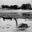 Bench &amp; Swan by Mjay