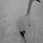Shivering Swan by Mjay