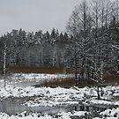 Winter Marsh by Antanas