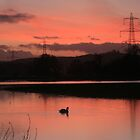 Swans at Sunset by Michelle Lovegrove
