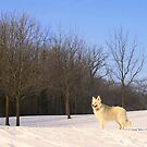 The Dog On The Hill by kkphoto1