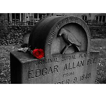 Poe's Red Rose Photographic Print