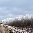Country Road on a Frosty Morning by pshootermike
