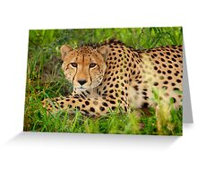 Cheetah - Okavango Delta, Botswana Greeting Card