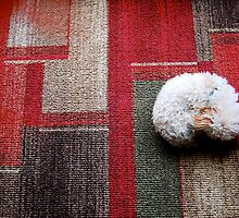 Spot on the Rug by cventresca