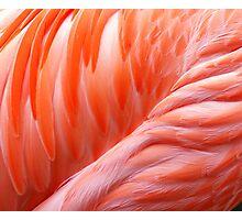Featherlike Photographic Print