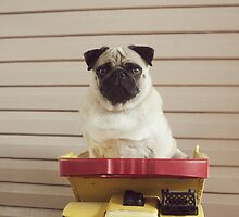 Pug in a Tonka by Katie Weychardt