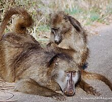 "THE CHACHMA BABOON - Papio ursinus - TOTAL COMMITMEND  - ""IN LOVE"" by Magaret Meintjes"