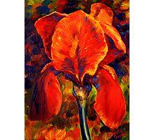 The Red Iris Photographic Print