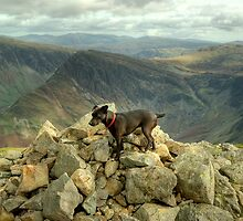 Tarn the Terrier... on High Crag by VoluntaryRanger