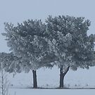Frosted Pines by lorilee
