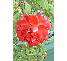 Rose of Red Photographic Print