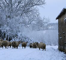 Sheep in the Snow by Pamela Jayne Smith