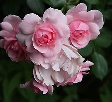 Cluster of Blushing Spring Roses by ElyseFradkin