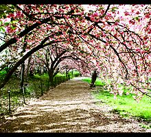 Spring blossom trail by Carlos Thomas