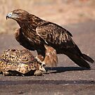 Tawny Eagle by Jo McGowan
