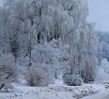 Weeping Willow at rest by Moninne Hardie
