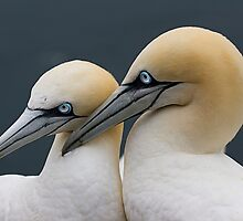 Pair Bonding by Stuart Robertson Reynolds