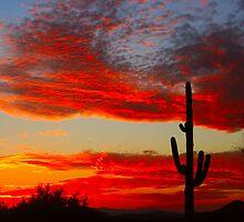 Arizona Sunset by Bo Insogna