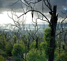 Bush regeneration, Kinglake Vic by ozzzywoman
