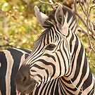 Zebra portrait by Jo McGowan