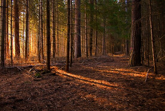 Light in the forest by Fineli