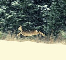 Roe doe in the snow by Alan Mattison IPA