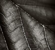 Teak in silver by Vikram Franklin