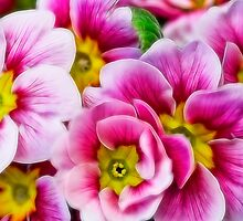 Fractalius Flowers by Lynne Morris