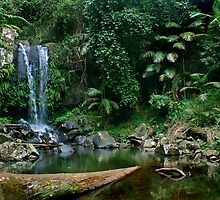 Curtis Falls - Mt Tamborine by Jane Marin