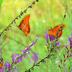 Magical Butterflies  by Catherine  Howell