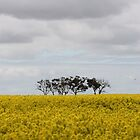 Sea of Yellow- Travelling to Normanville by Beacs