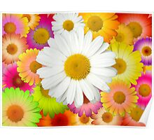 Great Camomile Field Poster