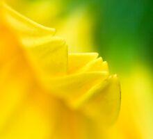 A beautiful blurr... by Prasad