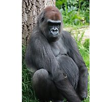 gorilla rests against a tree Photographic Print