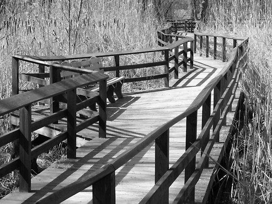 Walk This Way by David Schroeder