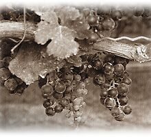Vintage Vines by SharonAHenson