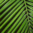 Cycas by Jeff Lowe