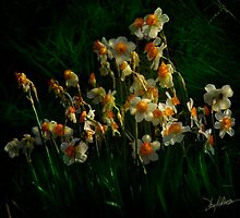 Daffodils by Patito49