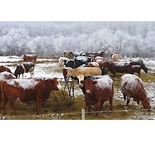 Have You Herd What I Herd? Photographic Print