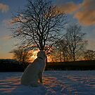 Ditte enjoys the winter sunset by Trine